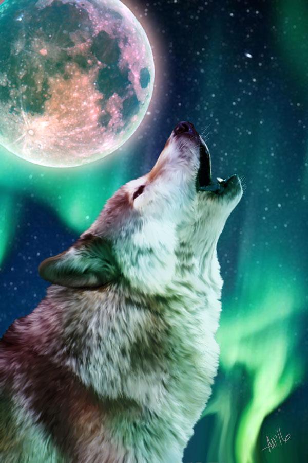 Aurora-Howl